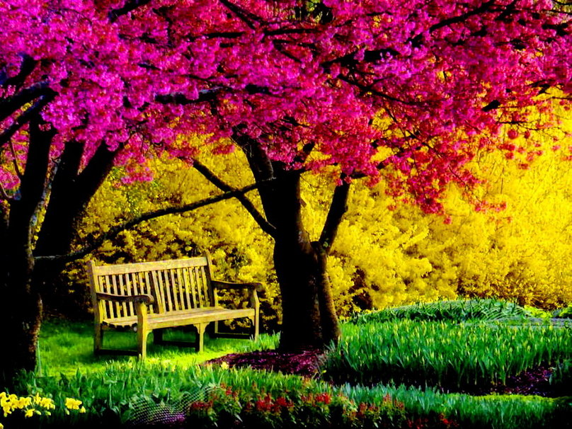 322459__a-bench-in-park_p